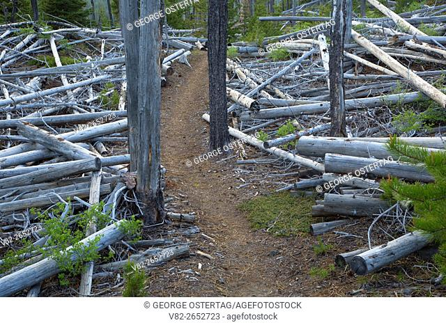 Metolius-Windigo Trail, Cascade Lakes National Scenic Byway, Deschutes National Forest, Oregon