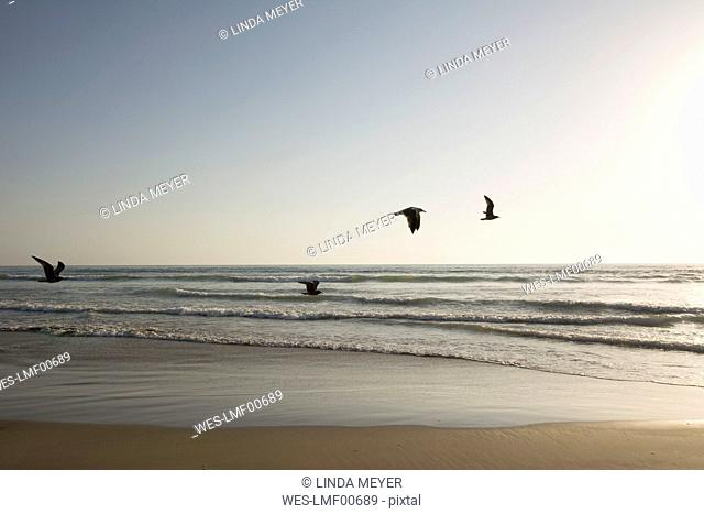 USA, California, Pismo Beach, silhouettes of four flying seagulls