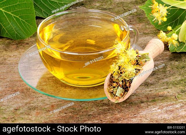 Cup lime blossom tea (Tilia platyphyllos), summer linden, lime blossom tea