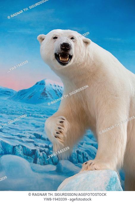Stuffed polar bear, Svalbard, Norway