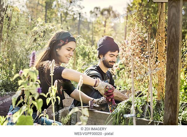 Happy couple gardening in urban garden together