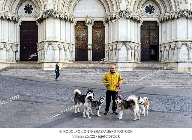 Dogs in front of the cathedral, Cuenca