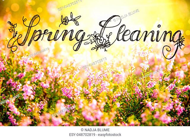 English Calligraphy Spring Cleaning. Erica Flower Field Or Meadow. Sunny Spring Or Summer Season
