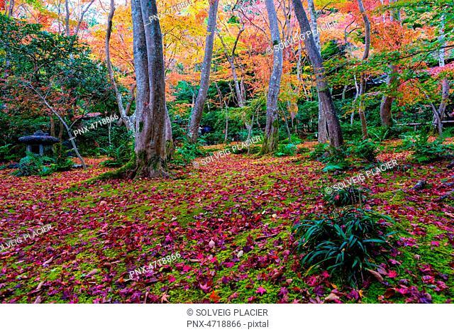 Gioji temple, Kyoto, Kansai, Honshu, Japan. Gardens