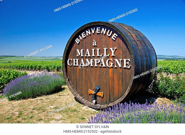 France, Marne , Mailly Champagne