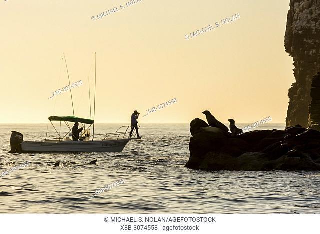 Photographer with California sea lions, Zalophus californianus, Los Islotes, Baja California Sur, Mexico