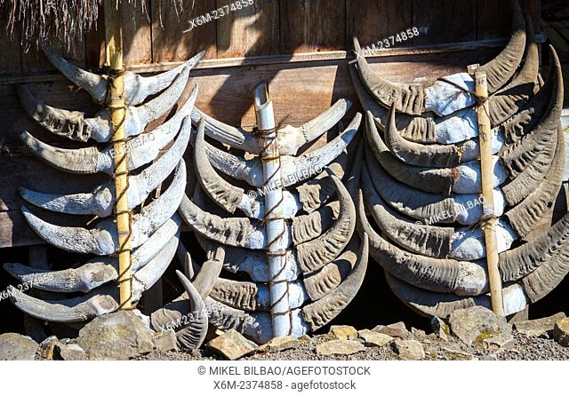 Buffalo horns in front of a house. Bena village. Flores island. Indonesia, Asia