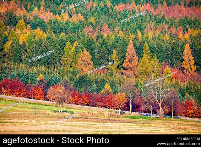 view of a colorful deciduous forest in autumn with multicolored yellow, orange, red and green foliage on the trees in a scenic full frame view of the changing...