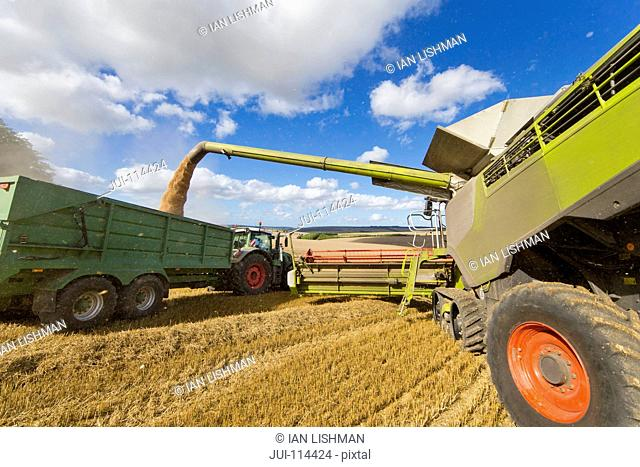 Combine Harvester Filling Trailer With Wheat At Harvest