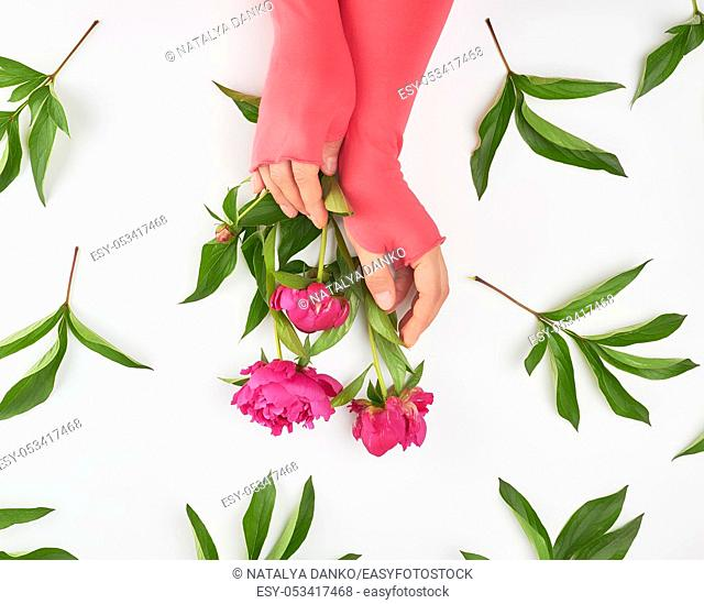 female hands and burgundy blooming peonies on a white background, fashionable concept for hand skin care, anti-aging care, spa treatments