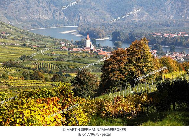 Vineyards, Weissenkirchen in the Wachau valley, Danube river, Waldviertel region, Lower Austria, Austria, Europe