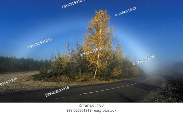 The bright fogbow over autumn misty forest