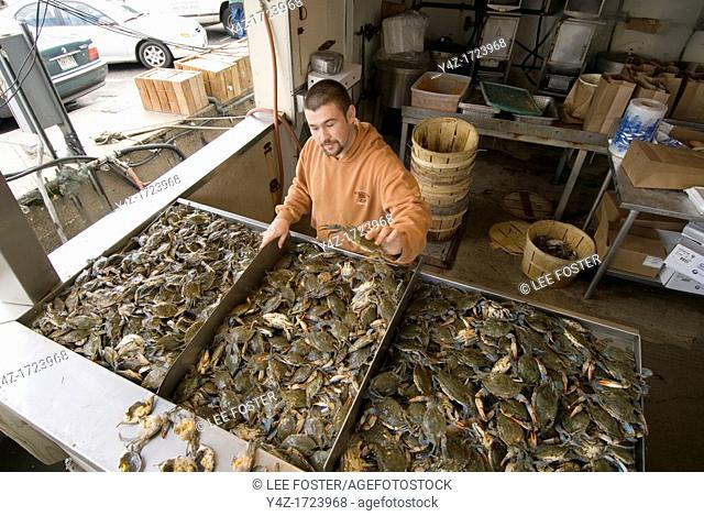 Washington DC, fresh fish and shellfish market on Maine Ave, selling Chesapeake Bay blue crab and various fish, all fresh and live off the boats