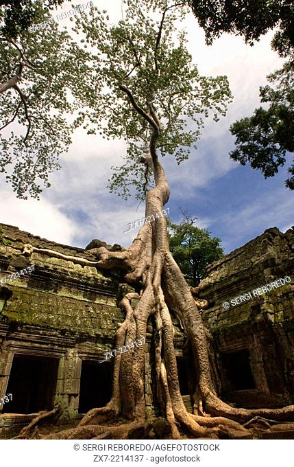 Ta Prohm Temple. Ta Prohm is as seductive as Lara Croft. The site of some of her cinematic adventures, it is a series of dark galleries and pillars held hostage...