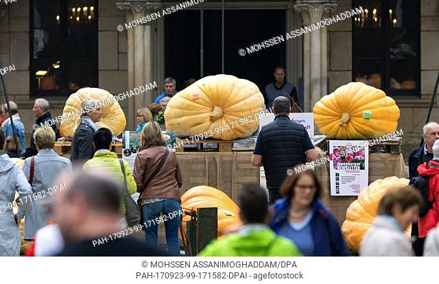 Massive pumpkins are displayed on pallets one day ahead of the 13th annual Pumpkin Championships in front of Ippenburg Castle in Bad Essen, Germany