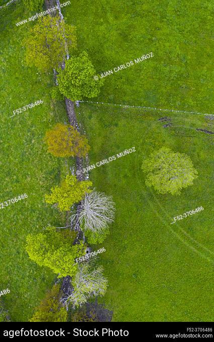 Agricultural landscape, Campiña, Oak tree, La Gándara, Alto Ason, Soba Valley, Cantabria, Spain, Europe