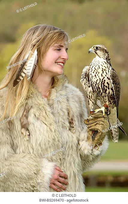 saker falcon Falco cherrug, on the arm of a young woman