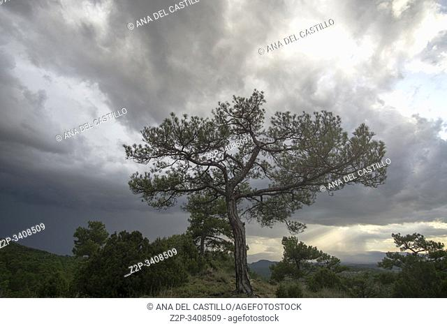 Scenic of black pine tree tops and mountains with storm clouds Gudar mountains Teruel Aragon Spain