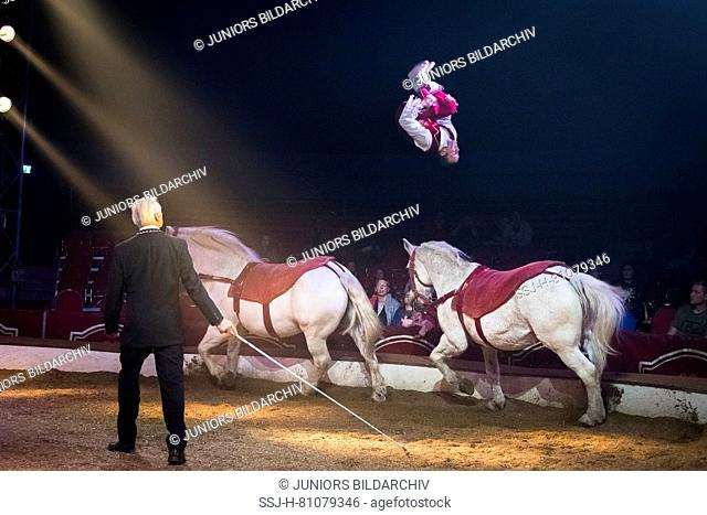 Performer jumping from the back of a Percheron Horse to another, during an show at the circus Louis Knie junior, Austria