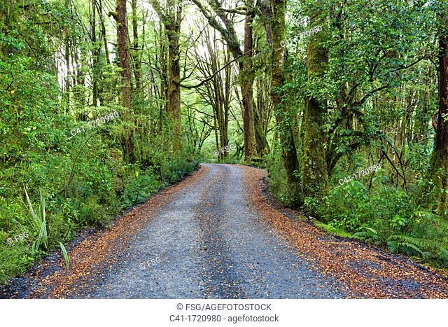 Fiordland  New Zealand