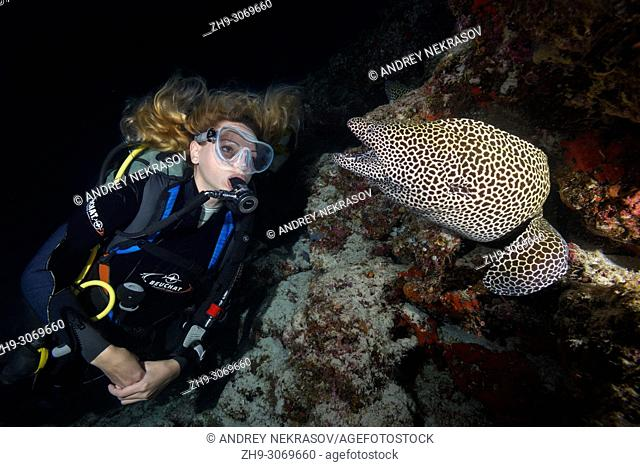 Female scuba diver looks at moray eel in the night. Laced moray, Leopard moray or Honeycomb Moray (Gymnothorax favagineus)
