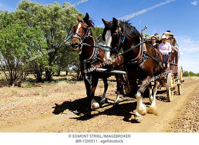 Tourists on a horse drawn carriage, stagecoach, Longreach, Queensland Outback, Australia