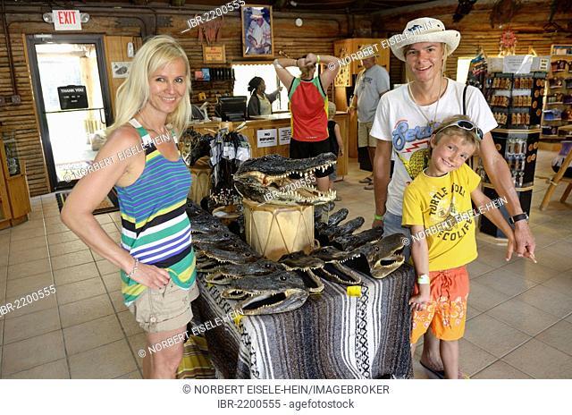 American alligators or gators (Alligator mississippiensis) on sale as souvenirs, Billie Swamp Critter Show, Big Cypress, Seminole-Country, Everglades, Florida