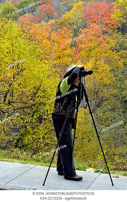 Photographer in autumn along the Newfound Gap Road, Great Smoky Mountains NP, Tennessee, USA