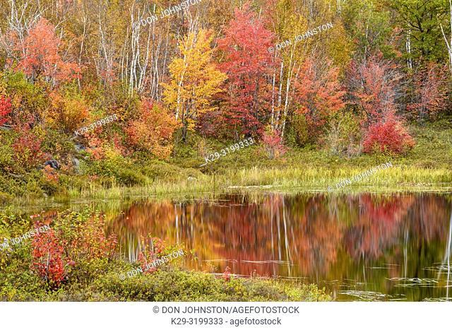 Autumn foliage reflected in a beaver pond, Greater Sudbury (Walden), Ontario, Canada