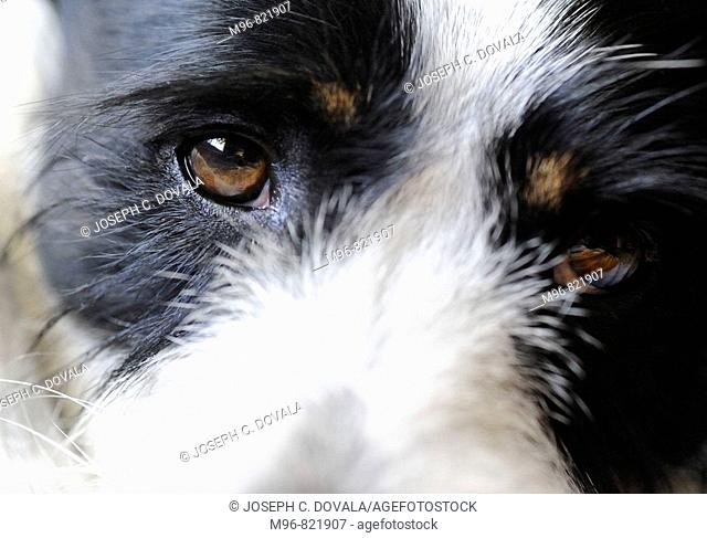 Close-up terrier mix dog