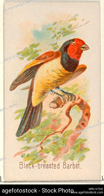 Black-breasted Barbet, from the Song Birds of the World series (N23) for Allen & Ginter Cigarettes. Publisher: Allen & Ginter (American, Richmond