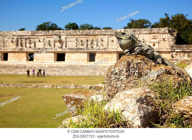 Iguana sitting on the rocks in front of the Quadrangle Of The Nuns with tourists at the background, Uxmal Ruins, Yucatan Province, Mexico, Central America