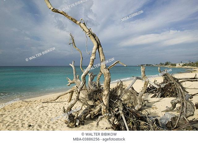 Cayman Iceland, Grand Cayman, Long Point, lake, beach, trees, roots, perished, jetsam, ABC-Inseln, little one Antilles, Dutch Antilles Caribbean island...