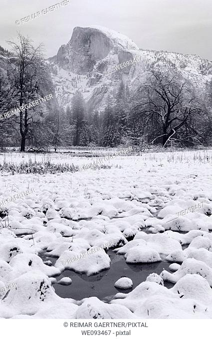 Monochrome of Half Dome from snow covered Cooks Meadow marsh