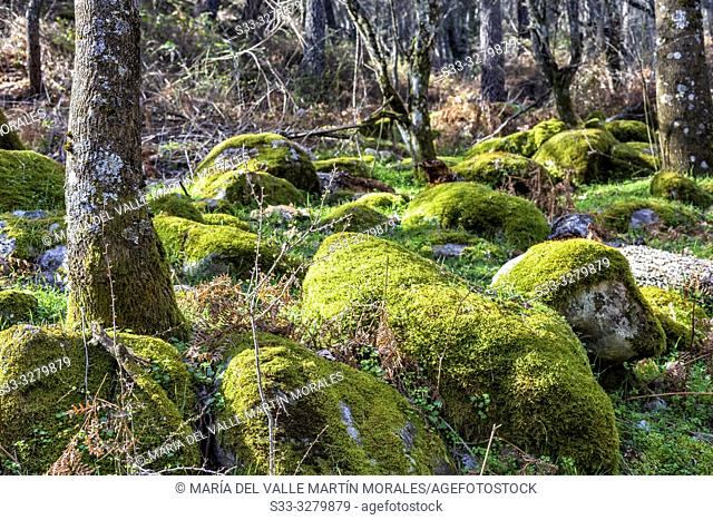 Rocks with moss at Iruelas Valley. Avila. Spain. Europe