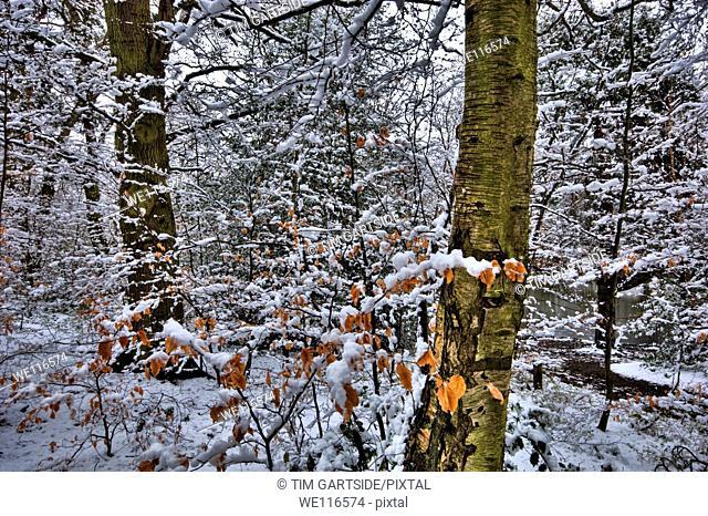 Snow, winter, Kent, England, UK, Europe