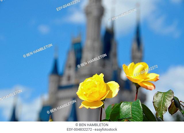 Flower in front of castle