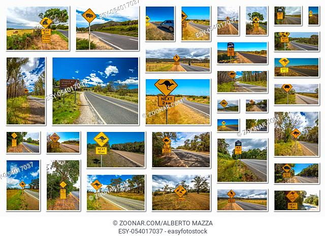 Australian road signs collage of kangaroo, koala, wombat, devil and penguin crossing road in Australian States of Victoria, New South Wales and Tasmania