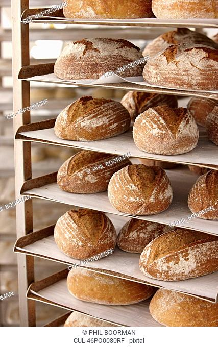 Trays of bread on rack in kitchen