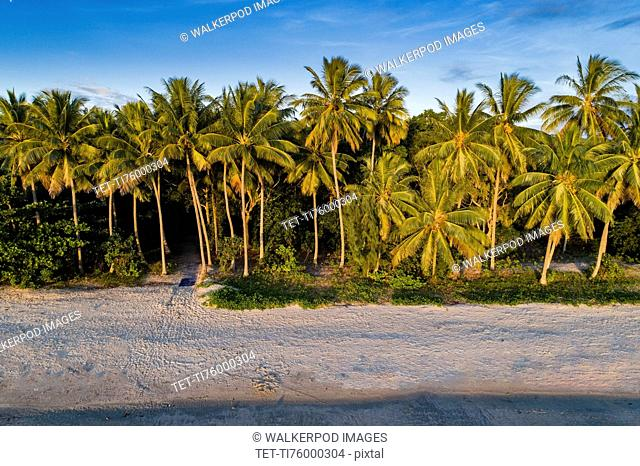 Australia, Queensland, Palm trees next to beach