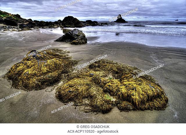 Low Tide, beach at Ecola State Park, Oregon Coast