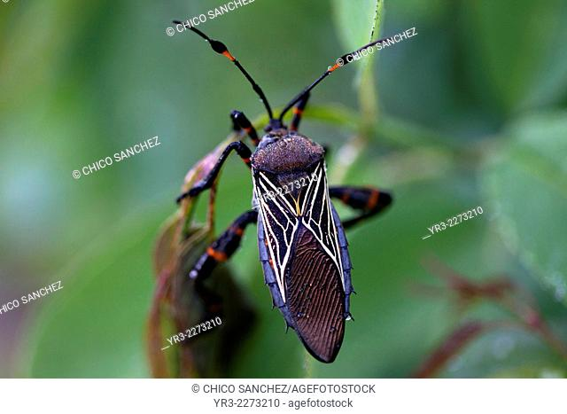 A beetle with geometric figures perches in a plant in San Sebastian Bernal, Queretaro state, Mexico