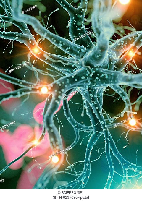 Illustration of an active human nerve cell