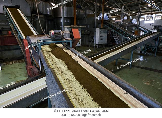 Kenya, Kericho county, Kericho, usine de thé Momul du Kenya Tea Development Agency (KTDA) / Kenya, Kericho county, Kericho