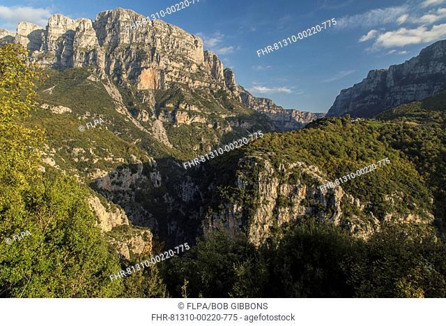 View of world's deepest gorge, from below Mikro Papingo, Vikos Gorge, Pindus Mountains, Vikos-Aoos N.P., Zagori, Epirus, Greece, October