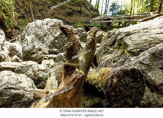 Germany, Bavaria, Kochel am See, path to Lainbachfall near Kochel