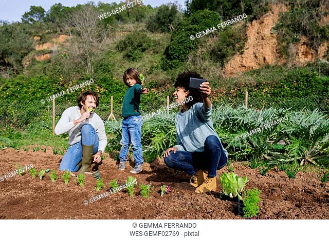 Family taking selfies of planting lettuce seedlings in an vegetable garden