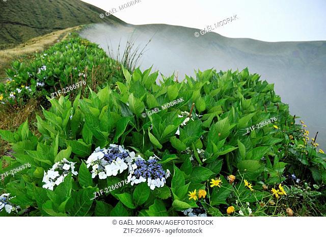 Fog in the caldeira of Faial island, Azores, Portugal