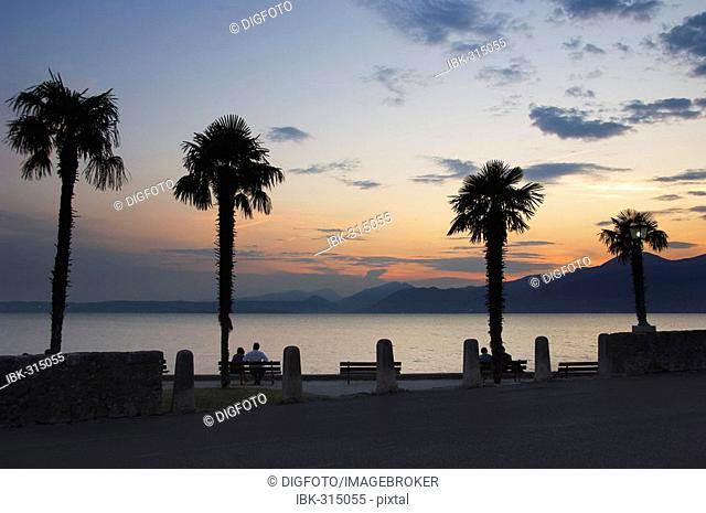 Palm trees at the lakeside promenade at dusk, Torri del Benaco, Lake Garda, Veneto, Italy