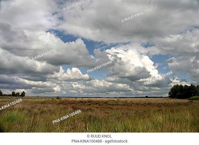 National Park Dwingelderveld, Dwingelose Heide, Dwingeloo, Drenthe, The Netherlands, Holland, Europe